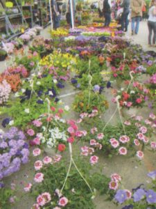 26ème marché aux fleurs